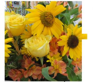 Star-flowers